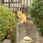 諏訪散歩~鷲宮神社、久喜市、白岡市、杉戸町の諏訪神社
